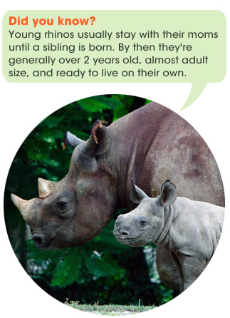 safari_facts_rhino